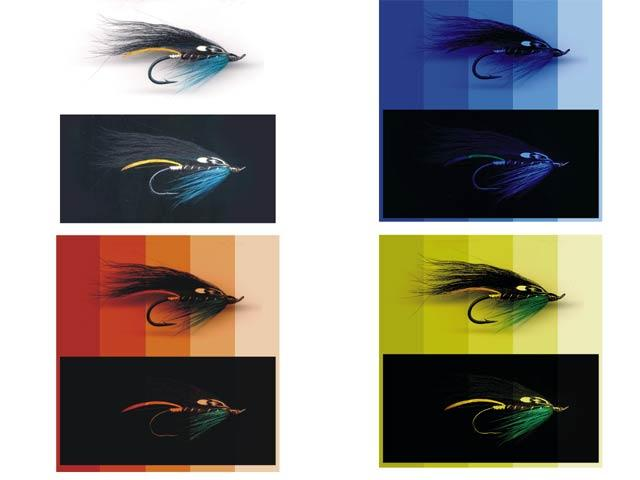 Laksens syn og farver