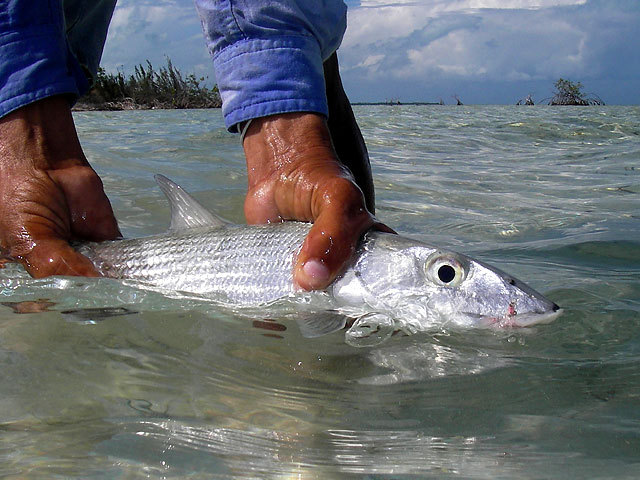 Bonefish - Mexico
