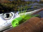 Hornfisk - Popper