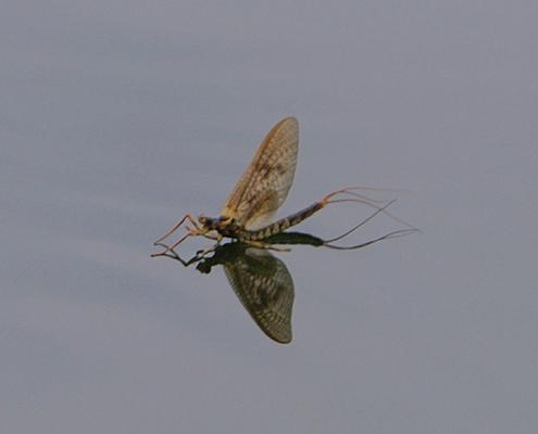 Hökensås Sportfiske