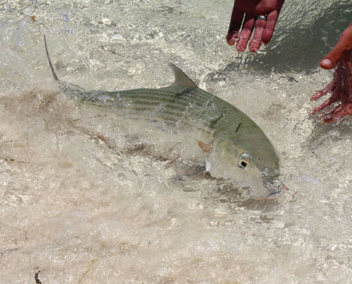 Bonefishing på den mexikanske atoll - Alacranes