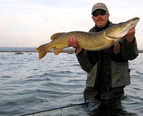 Geddefluefiskeri, Pikefly, Pike fly fishing
