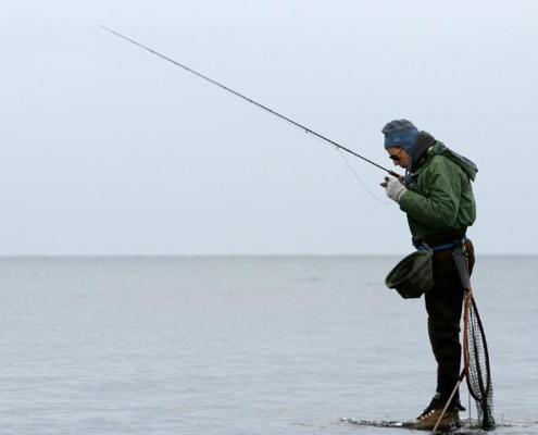 Det er størrelsen på havørreden der trækker lystfiskere til de sydsvenske kyster i de tidlige vintermåneder.