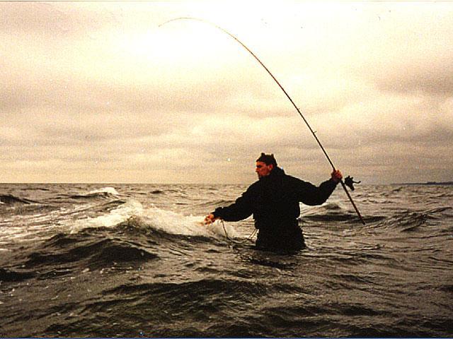 Bornholmske kystørreder