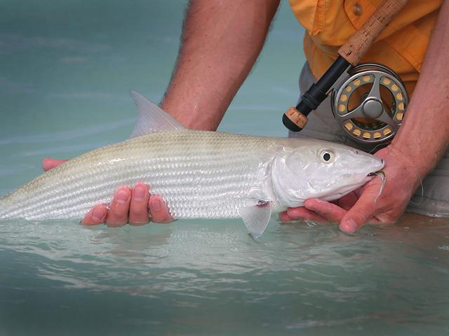 Bonefish Los Roques