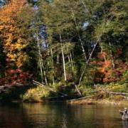 Storlaks i British Columbia, BC