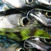 Makrel fluer
