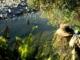 Fishspotting - New Zealand