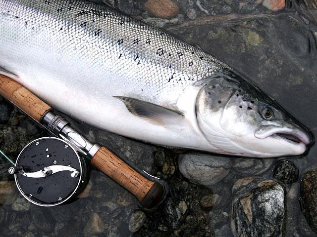 Rauma - Norge - Laksefiskeri