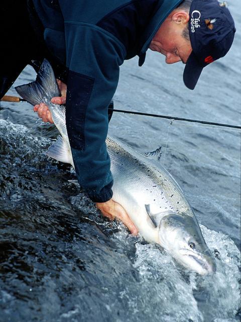 Steffen Juhl - Release of salmon, Ponoi