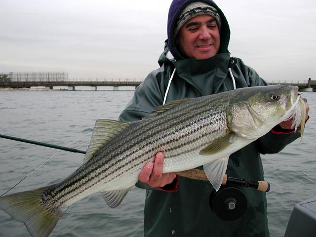 Stripers i New York