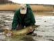 Forårsfiskeri efter Gedder på den sydsvenske kyst