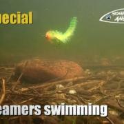 11-Streamer-flies-swimming-under-water