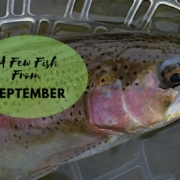 A-Few-Fish-From-September-2018
