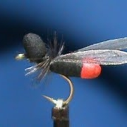 Beginner-Fly-Tying-a-FrostyFly-Flying-Ant-with-Jim-Misiura