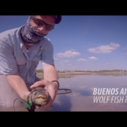 Fly-Fishing-Tararira-Wolf-Fish-in-Buenos-Aires