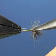 Fly-Tying-with-Hans-CDC-Thorax-Dun