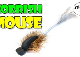 Learn-to-tame-the-hair-on-a-Morrish-MOUSE