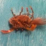 Permit-fly-tying-McCrab-deer-hair-crab