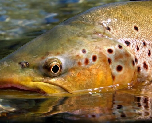 Pure-New-Zealand-Part-2-Trout-Fishing-by-Todd-Moen