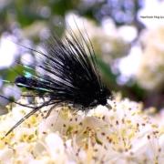 Tying-a-Detached-Bodied-Hawthorn-Hog-by-Davie-McPhail