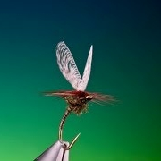Tying-a-Wally-wing-quill-emerger-with-Barry-Ord-Clarke