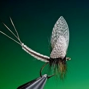 Tying-extended-mayfly-body-tutorial-with-Barry-Ord-Clarke