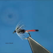 Tying-the-Hutchs-Pennell-with-Davie-McPhail