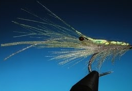 Tying-the-Ribbon-Shrimp-with-Barry-Ord-Clarke