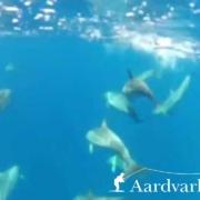 Alphonse-Island-Seychelles-February-2012