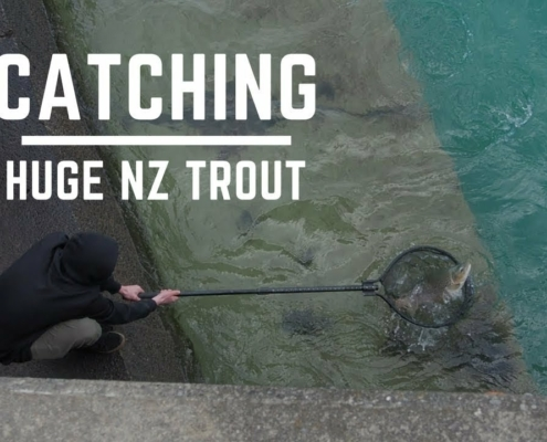 Catching-MONSTER-New-Zealand-Trout