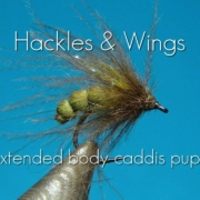 Extended-Body-Caddis-Pupa-Hackles-Wings