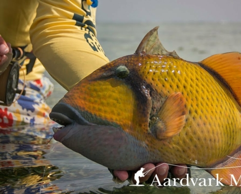 Flat-Out-Strange-Fly-Fishing-For-Trigger-Fish-In-Sudan