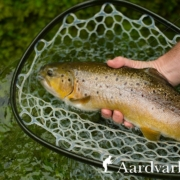 Fly-Fishing-the-River-Anton-Chalkstream