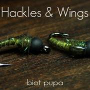Fly-Tying-Biot-Pupa-Hackles-Wings
