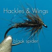Fly-Tying-Black-Spider-Hackles-Wings