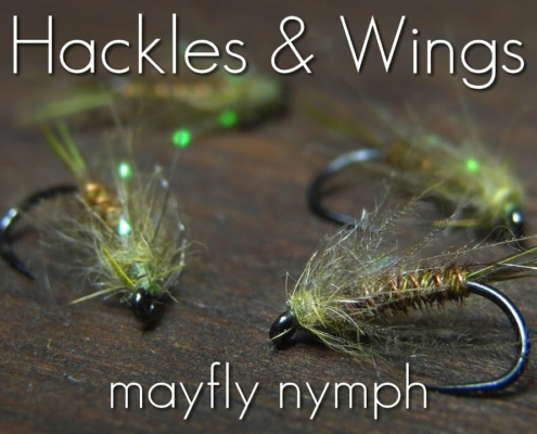 Fly-Tying-Mayfly-Nymph-Hackles-Wings