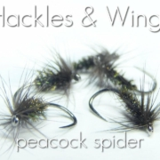 Fly-Tying-Peacock-Spider-Hackles-Wings