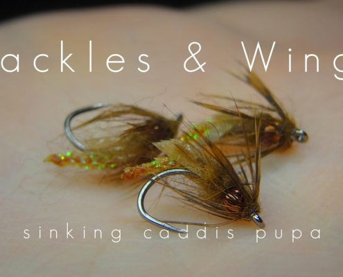 Fly-Tying-Sinking-Caddis-Pupa-Hackles-Wings
