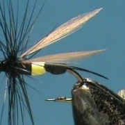 Fly-Tying-a-Wasp-with-Jim-Misiura