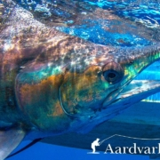 Fly-fishing-for-sailfish-and-tuna-from-Zancudo-Lodge-in-Costa-Rica