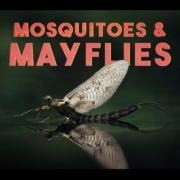 Mosquitoes-Mayflies-EP3-Fly-Fishing-Finnmark