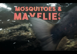 Mosquitoes-Mayflies-EP4-In-A-Cloud-Of-Caddis
