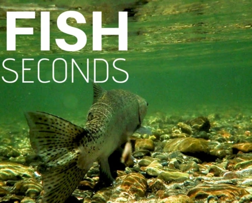NZ-Trout-Fishing-3-fish-in-30-seconds