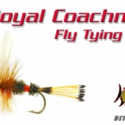 Royal-Coachman-Classic-Dry-Fly-Tying-Video-Instructions