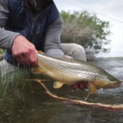 SUMMER-HYPE-Fishing-The-Salmon-Fly-Hatch-Montana