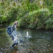 Tiny-river-Big-fish