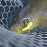 Top-10-Bucknasty-Brown-Trout-Eats