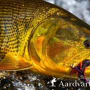 Tsimane-3X-Fly-Fishing-For-Golden-Dorado-in-Bolivia