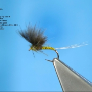 Tying-a-CDC-Spring-Olive-Dun-with-Davie-McPhail